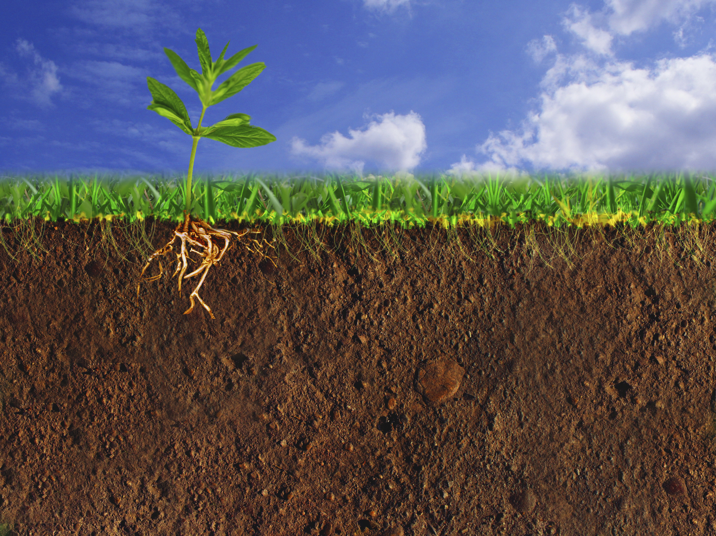 Getting down to earth a closer look at life below our for What makes up soil